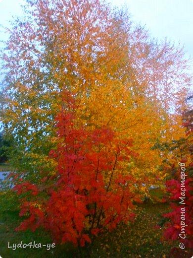 """Вот и осень пришла. Разукрасила деревья в яркие цвета! Особенная красота в осени 2017г. Она вдохновляет, удивляет, заставляет творить. Вот и у меня """"родилась"""" осенняя берёза - плод моих наблюдений за осенними переменами фото 4"""