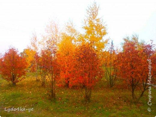 """Вот и осень пришла. Разукрасила деревья в яркие цвета! Особенная красота в осени 2017г. Она вдохновляет, удивляет, заставляет творить. Вот и у меня """"родилась"""" осенняя берёза - плод моих наблюдений за осенними переменами фото 5"""