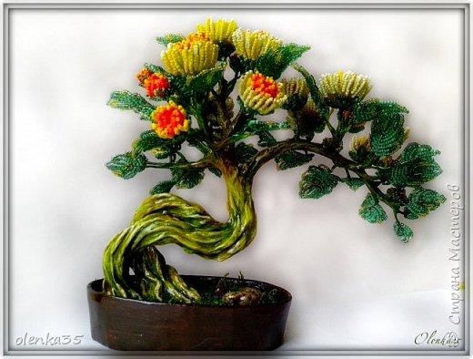 Бонсайная хризантема фото 3