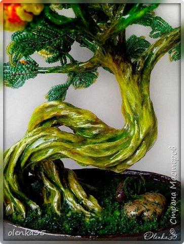 Бонсайная хризантема фото 4
