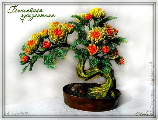 Бонсайная хризантема фото 1