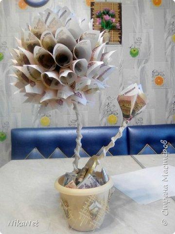 Денежные деревья. фото 3