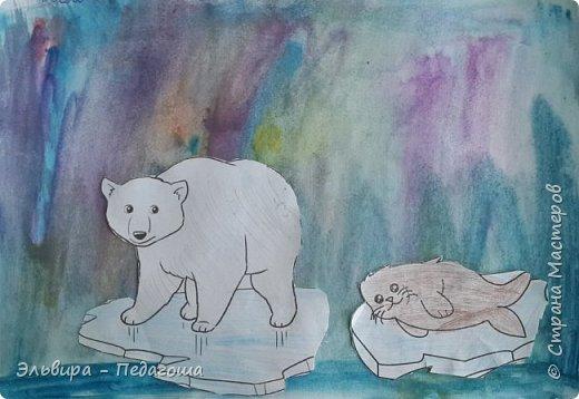 Животные Арктики фото 1