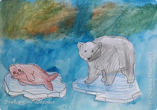 Животные Арктики фото 12