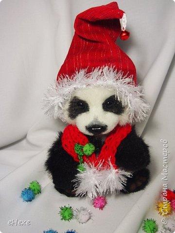 Кеша тоже решил поучаствовать в Рождественское тедди-шоу. фото 1