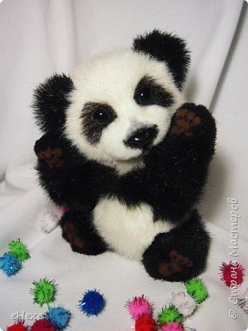 Кеша тоже решил поучаствовать в Рождественское тедди-шоу. фото 4