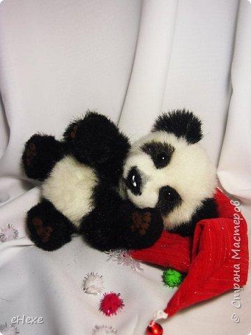 Кеша тоже решил поучаствовать в Рождественское тедди-шоу. фото 5