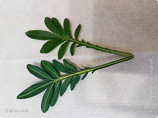 Такой цветочек газании (гацании) вырастила из бумажных полосок. Ширина полосок 2мм. сам цветочек размером в 5см. Уж очень красиво и разнообразно цвели эти цветы у меня на клумбе. Захотелось повторить в бумаге их красоту. Получилось или нет- судить вам, дорогие мастерицы. Перед тем, как делать немахровые хризантемы, которые многим мастерицам понравились, я опробовала для себя новый способ изготовления более натуральных цветочков вот на этом самом цветочке ГАЗАНИИ. фото 9