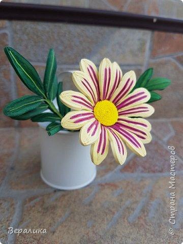 Такой цветочек газании (гацании) вырастила из бумажных полосок. Ширина полосок 2мм. сам цветочек размером в 5см. Уж очень красиво и разнообразно цвели эти цветы у меня на клумбе. Захотелось повторить в бумаге их красоту. Получилось или нет- судить вам, дорогие мастерицы. Перед тем, как делать немахровые хризантемы, которые многим мастерицам понравились, я опробовала для себя новый способ изготовления более натуральных цветочков вот на этом самом цветочке ГАЗАНИИ. фото 2