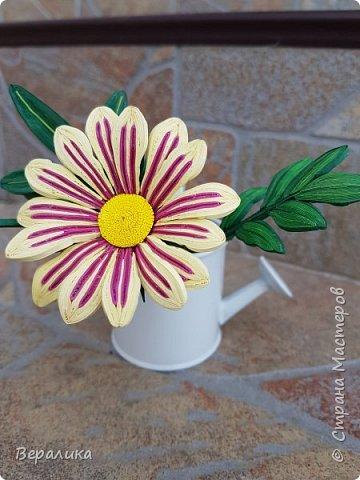 Такой цветочек газании (гацании) вырастила из бумажных полосок. Ширина полосок 2мм. сам цветочек размером в 5см. Уж очень красиво и разнообразно цвели эти цветы у меня на клумбе. Захотелось повторить в бумаге их красоту. Получилось или нет- судить вам, дорогие мастерицы. Перед тем, как делать немахровые хризантемы, которые многим мастерицам понравились, я опробовала для себя новый способ изготовления более натуральных цветочков вот на этом самом цветочке ГАЗАНИИ. фото 3