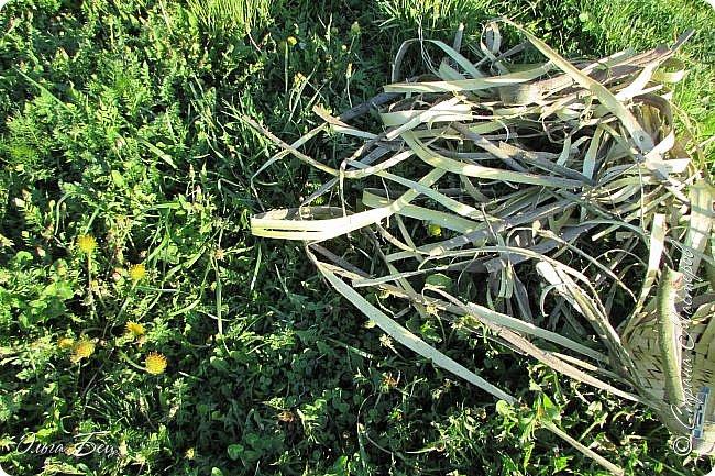 Добрый день! Встречаю вас душистой лесной клубникой в плетёном коробе из ивового  лыка:) фото 2