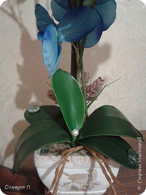 Отсутствие солнечного света и засуха нисколько не смутит этот комнатный цветок....Он будет радовать вас своим цветением при любых обстоятельствах....Главное-во время стирать с него пыль.... фото 2
