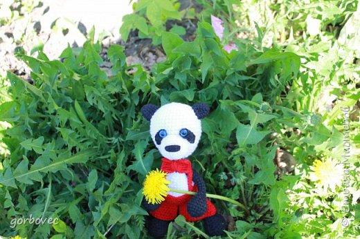 Большая панда фото 3