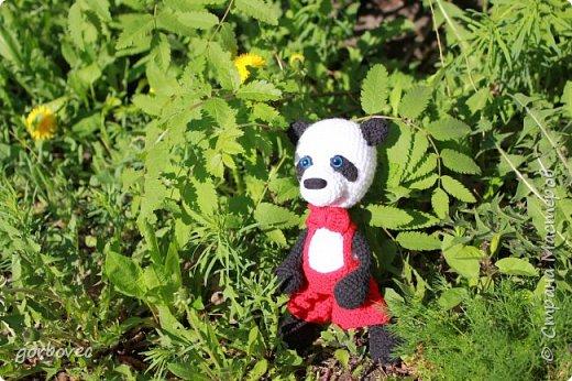 Большая панда фото 2