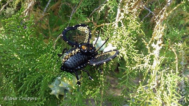 Броши насекомые.Муха,жучок и бабочка. фото 5