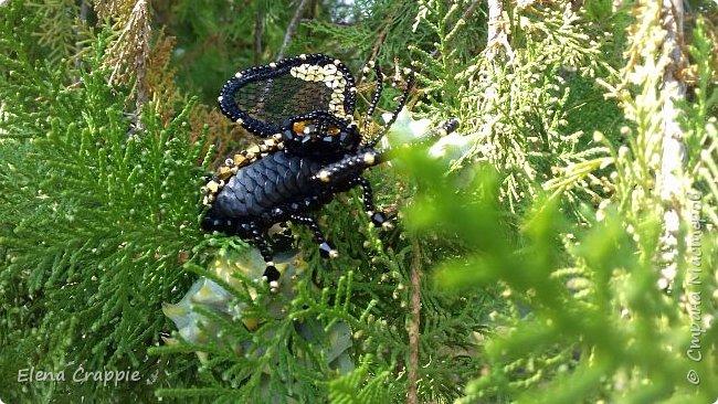Броши насекомые.Муха,жучок и бабочка. фото 7