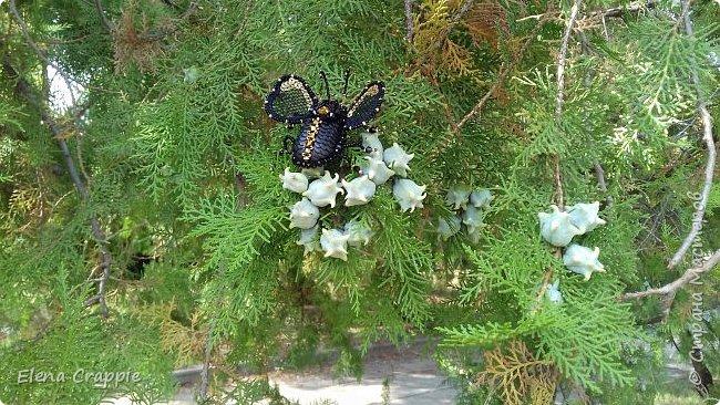 Броши насекомые.Муха,жучок и бабочка. фото 11