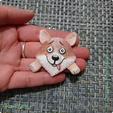 Добрый день! Сегодня я к вам с брошками из полимерной глины.  Наступающий Новый год - год собаки. Поэтому слепила корги.   фото 1