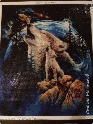 Волки фото 1