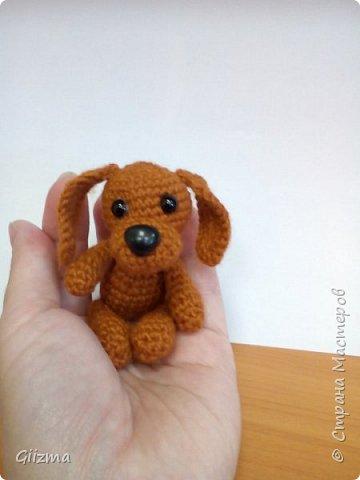 Здравствуйте!  И вот мои новые похвастушки ))  Собачки-амигуруми. Эта такса - предмет моей особой гордости, поскольку это первая игрушка, связанная мной самостоятельно, без мастер-класса.  фото 7