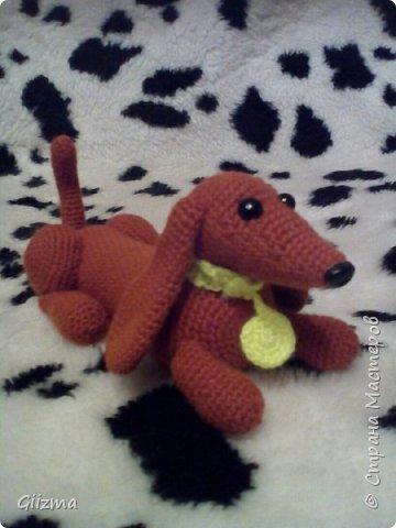 Здравствуйте!  И вот мои новые похвастушки ))  Собачки-амигуруми. Эта такса - предмет моей особой гордости, поскольку это первая игрушка, связанная мной самостоятельно, без мастер-класса.  фото 2