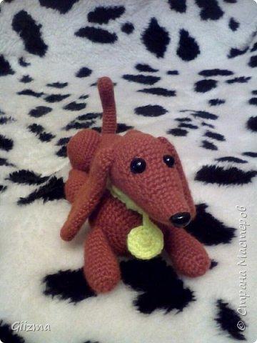 Здравствуйте!  И вот мои новые похвастушки ))  Собачки-амигуруми. Эта такса - предмет моей особой гордости, поскольку это первая игрушка, связанная мной самостоятельно, без мастер-класса.  фото 3