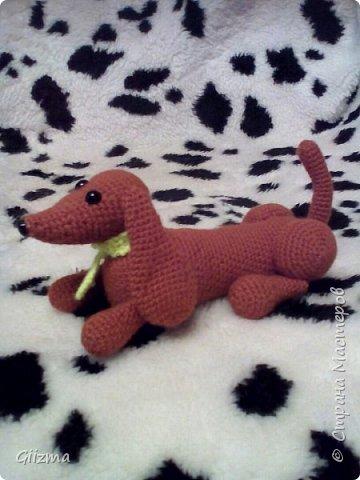 Здравствуйте!  И вот мои новые похвастушки ))  Собачки-амигуруми. Эта такса - предмет моей особой гордости, поскольку это первая игрушка, связанная мной самостоятельно, без мастер-класса.  фото 4