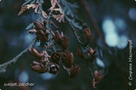 Ноябрьский выходной в Казани. Езжу туда развеяться и побродить на свежем воздухе. Конечно же, с фотоаппаратом :) фото 4