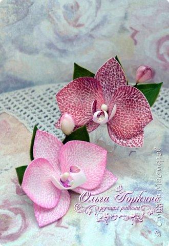 Немного цветов к декабрю. фото 23