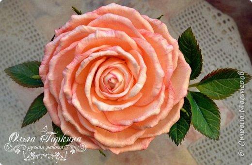 Немного цветов к декабрю. фото 5