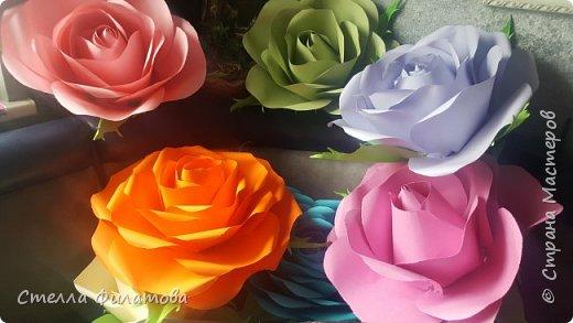 большие розы для украшения класса к дню рождения классного руководителя. фото 3