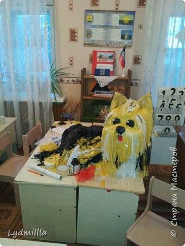 Собака Карамелька фото 1