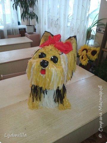 Собака Карамелька фото 2