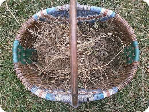 .Привет всем, я к вам снова со своим варевом. Сначала нашла в интернете таблицу с каких трав можно получить тот  или иной цвет   морилки. Меня давно заинтересовал зелёный цвет который можно было получить с корней полынь-травы. Давно я планировала сварить морилку, времени все не хватало, а тут пообещали в начале декабря снег, куда же дальше откладывать  свой эксперемент.  фото 2