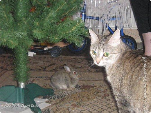 Доброго времени суток, дорогие жители страны мастеров. Разрешите представить - Симона.Я уже познакомила вас с Мухой и Мартином, а это - новый член  семьи, она появилась в  доме недавно. Кого только в нашем доме не было. В разное время жили рыбки, попугайчики, хомяки, крыса,морские свинки,куры с петухом ( это в городской то квартире и без балкона), 2 семейства перепёлок, какое то время жила чайка с перебитым крылом ( птичка красивая, но с вздорным характером и большая любительница гадить сверху. Чуть подлечили и отправили на волю), кошки, коты и собаки, фото 5