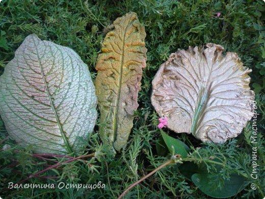 Здравствуйте , дорогие  мастера  и  мастерицы !   Ранней  осенью  сделала  ещё  несколько  малых и  средних  листьев  из  цементной  массы . Затем  покрасила  их  краской  из  баллончиков .  Предлагаю  посмотреть  на  них   в  процессе  работы  и   затем  в  саду . фото 7