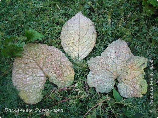 Здравствуйте , дорогие  мастера  и  мастерицы !   Ранней  осенью  сделала  ещё  несколько  малых и  средних  листьев  из  цементной  массы . Затем  покрасила  их  краской  из  баллончиков .  Предлагаю  посмотреть  на  них   в  процессе  работы  и   затем  в  саду . фото 6