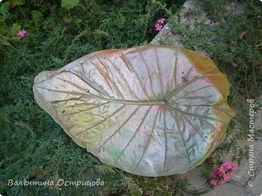 Здравствуйте , дорогие  мастера  и  мастерицы !   Ранней  осенью  сделала  ещё  несколько  малых и  средних  листьев  из  цементной  массы . Затем  покрасила  их  краской  из  баллончиков .  Предлагаю  посмотреть  на  них   в  процессе  работы  и   затем  в  саду . фото 12