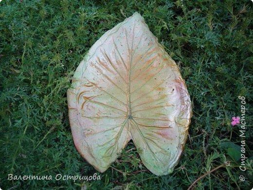 Здравствуйте , дорогие  мастера  и  мастерицы !   Ранней  осенью  сделала  ещё  несколько  малых и  средних  листьев  из  цементной  массы . Затем  покрасила  их  краской  из  баллончиков .  Предлагаю  посмотреть  на  них   в  процессе  работы  и   затем  в  саду . фото 14