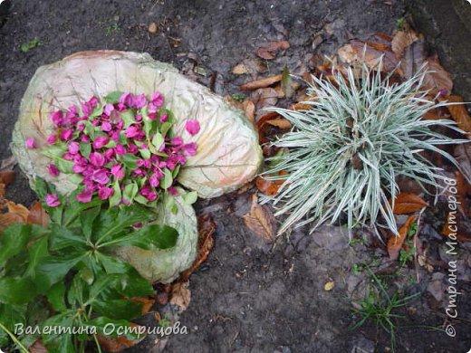 Здравствуйте , дорогие  мастера  и  мастерицы !   Ранней  осенью  сделала  ещё  несколько  малых и  средних  листьев  из  цементной  массы . Затем  покрасила  их  краской  из  баллончиков .  Предлагаю  посмотреть  на  них   в  процессе  работы  и   затем  в  саду . фото 19