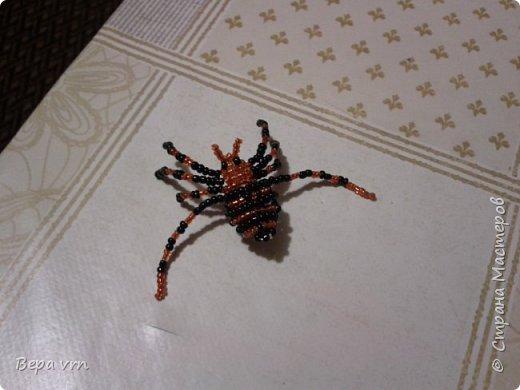 Скорпион. фото 2