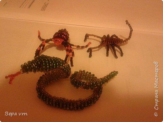 Скорпион. фото 5