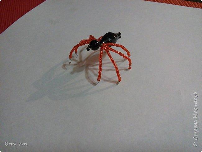 Скорпион. фото 10