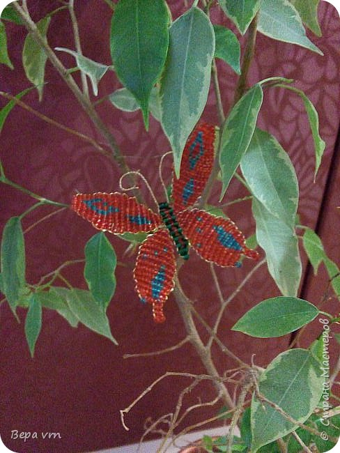 Скорпион. фото 11