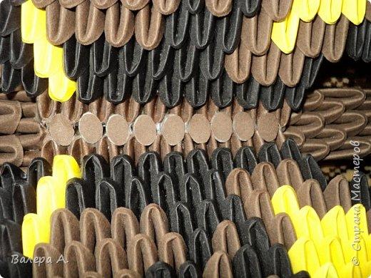 Бабочка махаон. фото 5