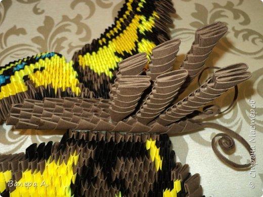 Бабочка махаон. фото 6