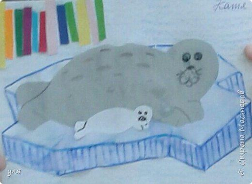 тюлень фото 1