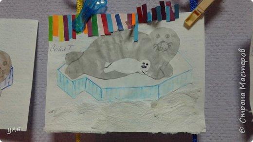 тюлень фото 3