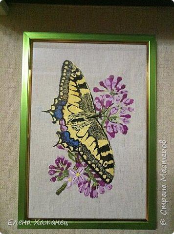 Бабочки фото 8