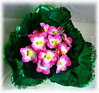 Фиалка розовая фото 2